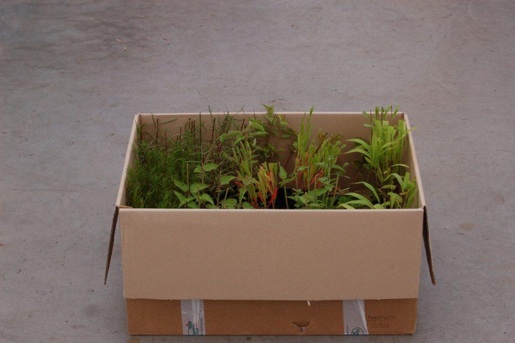 Ansicht der schonenden Verpackung der lebenden Pflanzen