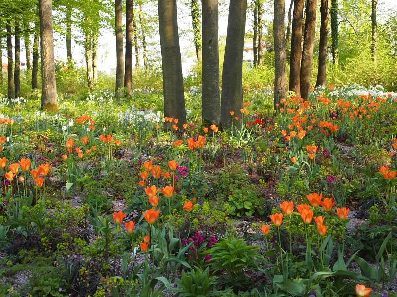 Zwiebeln und Stauden erwachen im Frühling zum Märchenwald.