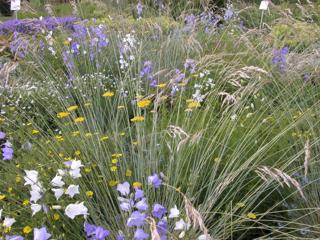 Sommerwind: Eine Mischung in der Gräser tolle Akzente setzen.